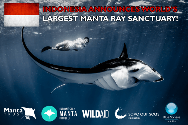 Indonesia Creates Manta Ray Sanctuary