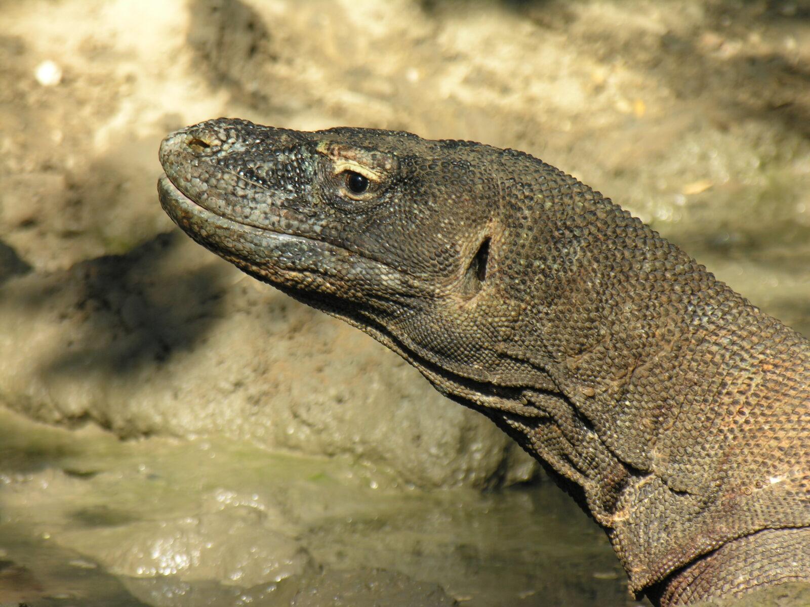 Indonesia Might Close Komodo National Park