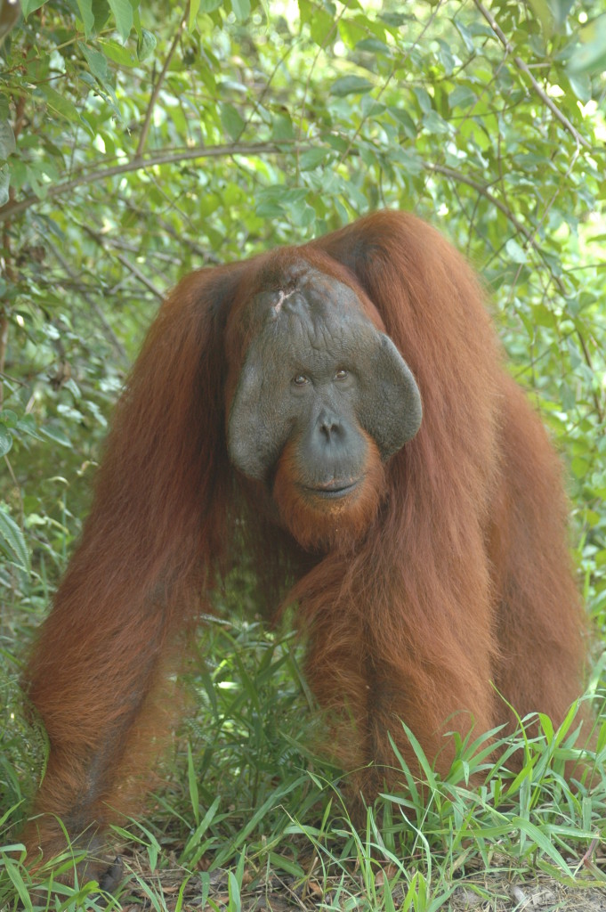 orangutan tours and ecotourism