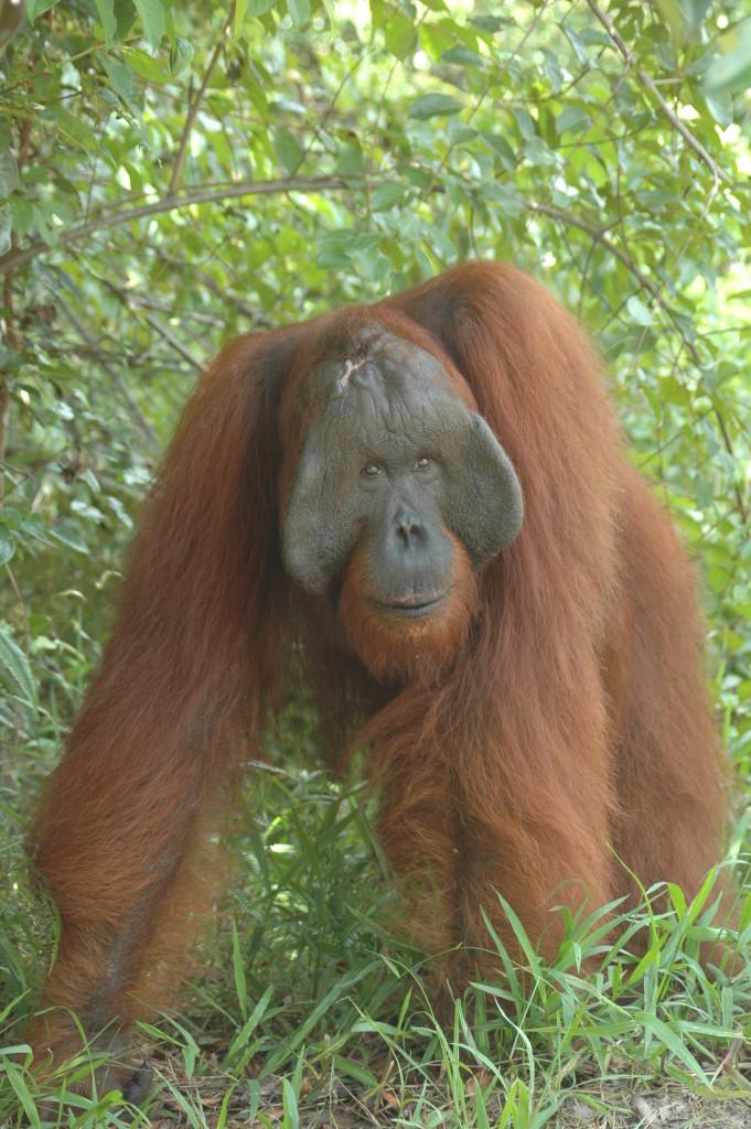 orangutan tours and ecotourism